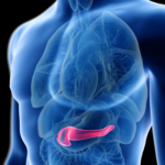 pankreas01-2